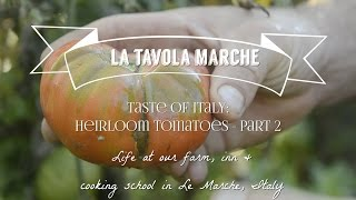 Tase Of Italy: Heirloom Tomatoes Part 2 Blight (episode 12)