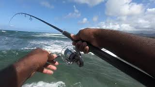 MOST FISH WE'VE EνER CAUGHT IN ONE SESSION!   Free Will Fishing! S:3 E:5 -