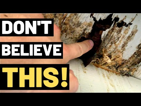 THE TRUTH ABOUT WOOD ROT (You Need To Watch This!!)