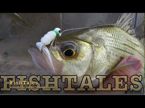FishTales: And the Run Begins