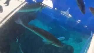 Palma Aquarium Shark Vision Boat Peque Páginas