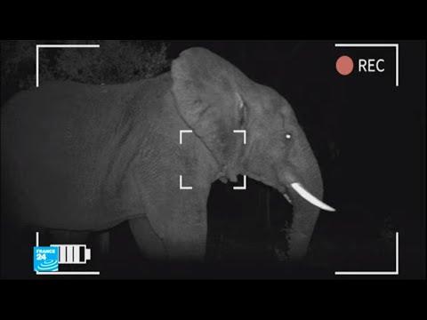 بهجة وفرح في السنغال إثر ظهور فيل عملاق في محمية طبيعية!!