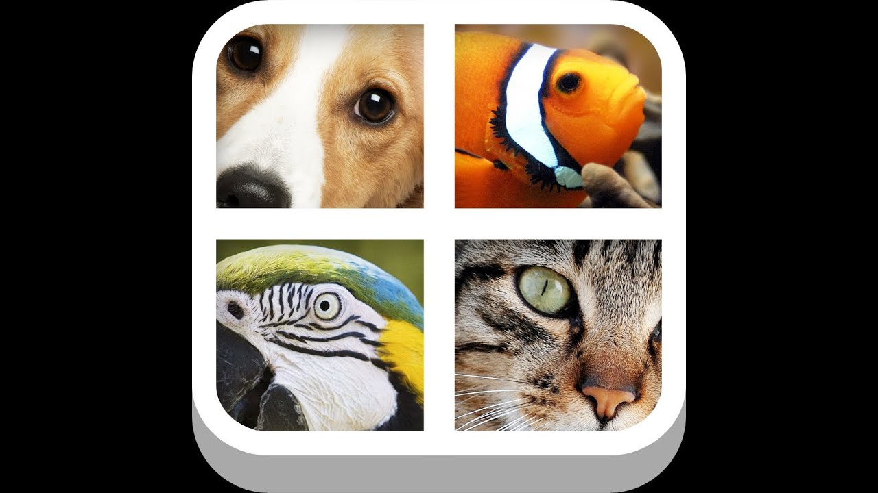 4 Pics 1 Word Answers and Cheat]