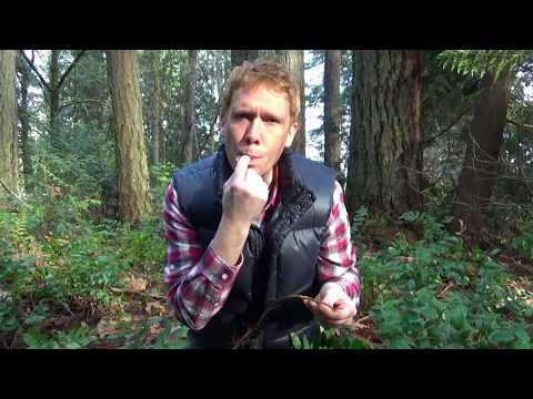 Oregon Grape Herbal Medicine WEED WALK with Dr. Iverson