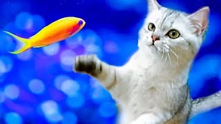 САМОЕ СМЕШНОЕ ВИДЕО Funny Cat Simka Видео про котиков Приколы с котами Kittens Prank Magic Cats