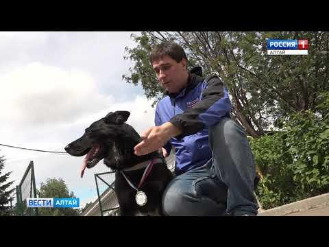 Барнаульская овчарка Сандера раскрыла сотню преступлений и спасла жизнь человеку