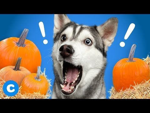 4-pumpkin-packed-foods-for-dogs