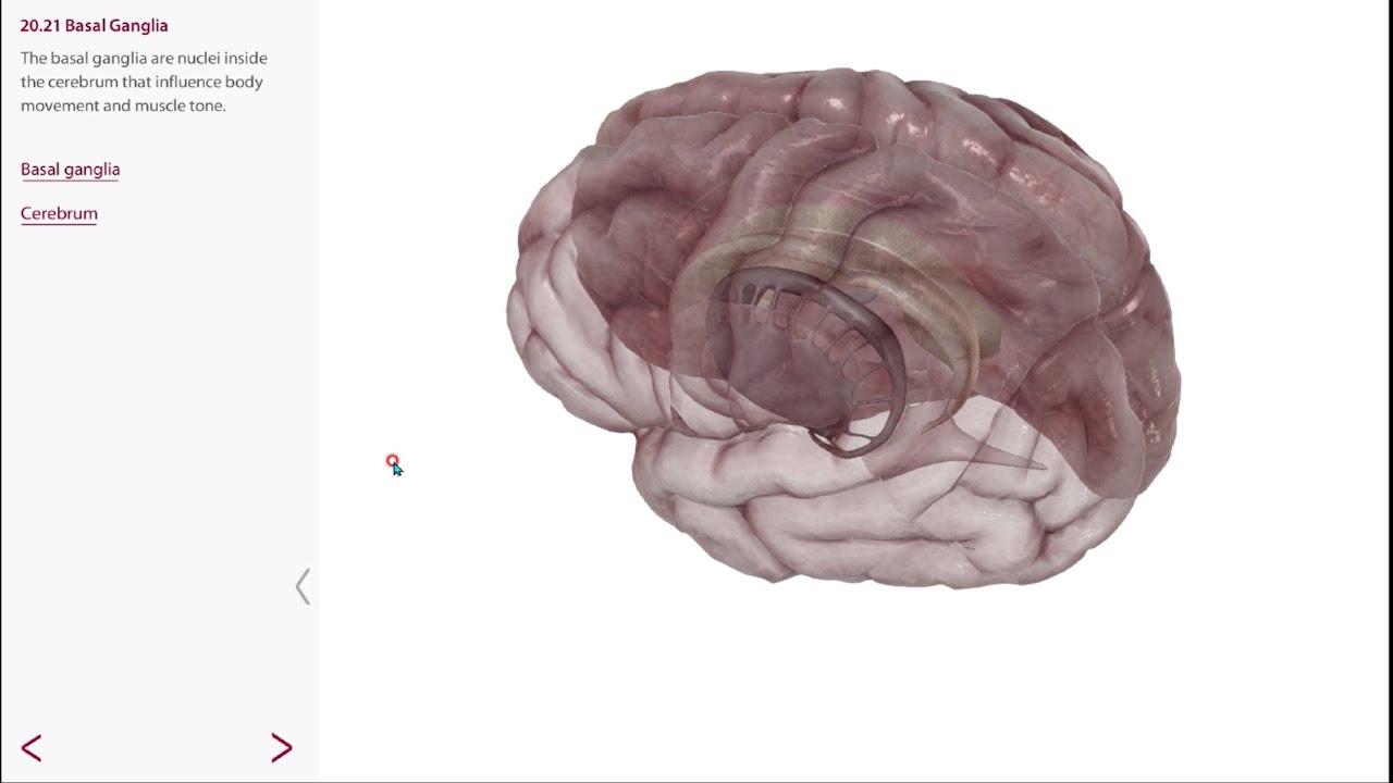 대뇌와 소뇌