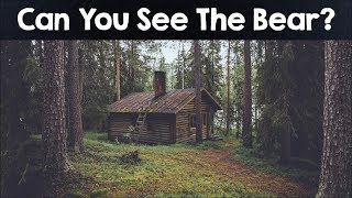 Can You Find The Hidden Animals in These 10 Photos? Almost Nobody C...