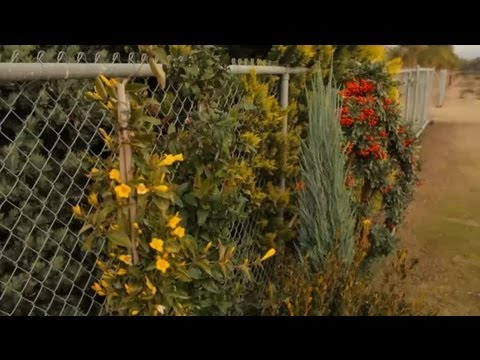 Ideas To Hide Garden Fences : Professional Gardening Tips