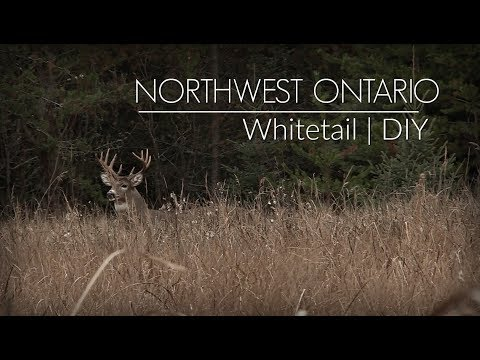 Ontario Whitetail Hunt || DIY || Public Land Deer Hunting