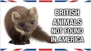 British Animals You Won't Find in America  Anglophenia Ep 27