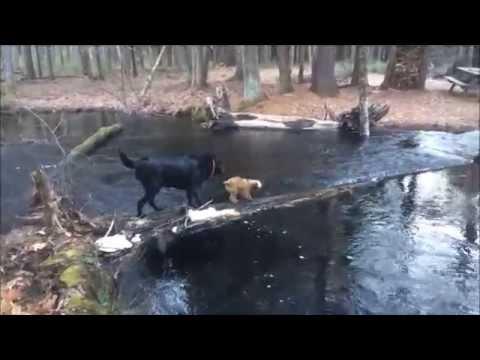 Funny Dog Fail!