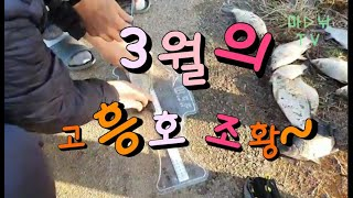 붕어낚시, 3월 고흥호 조황!!!!! - 마낚TV(마음…