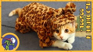 Делаем одежду для Рыжика. Как сделать одежду для кота своими руками. Рыжик - ЛЕОПАРД