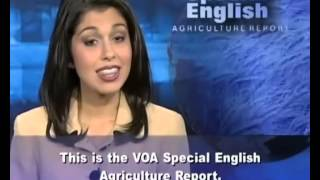 VOA learning English 2015 Part 9-Agrculture Report-Luyện Nghe Tiếng Anh Qua Tin Tức VOA