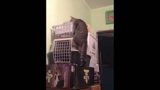 Кошка падает с вершины