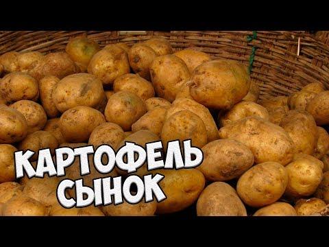 Самые вкусные сорта картофеля 🌟 Картофель СЫНОК 🌟 Обзор hitsadTV