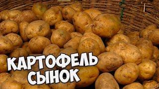 Самые вкусные сорта картофеля 🌟 Картофель СЫНОК 🌟 Обзор hitsadTV(, 2018-01-21T08:00:00.000Z)