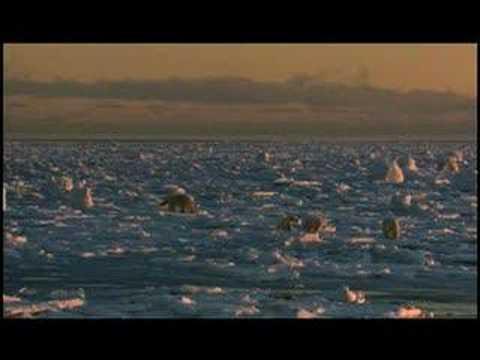Sunrise Earth - Polar Bears (Clip 1)