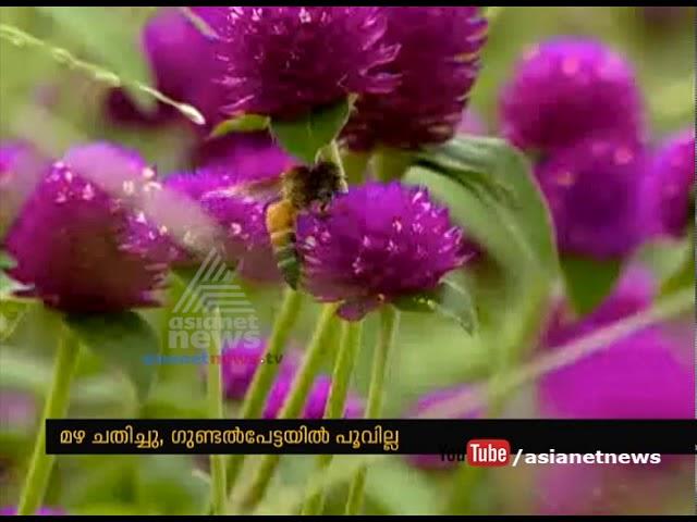 Lack of rain decrease  Flower production in Gundlupet Karnataka