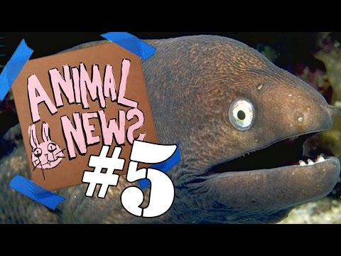 ANIMAL NEWS NETWORK #5