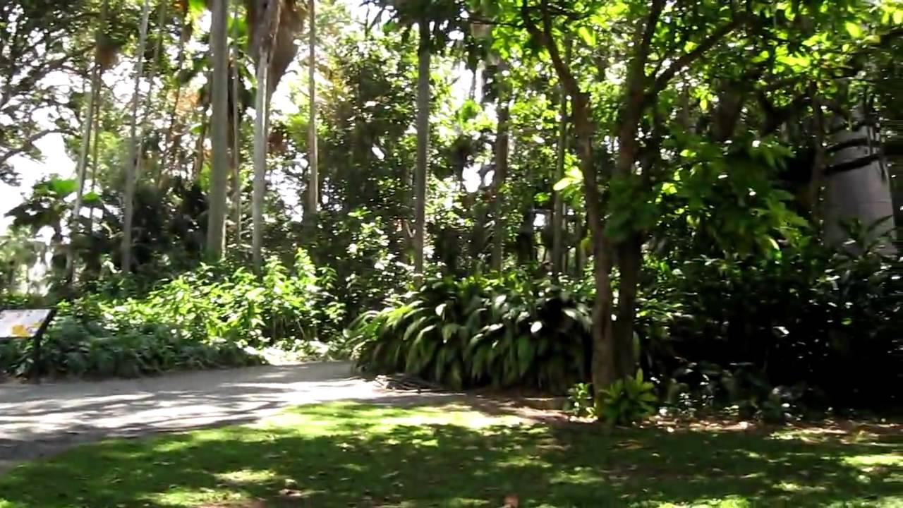 Hawaii honolulu ohau foster botanical garden hawaii honolulu ohau 2010 03 23 youtube for Foster botanical garden honolulu
