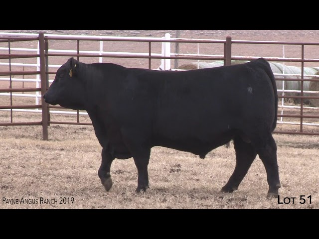 Payne Angus Ranch Lot 51