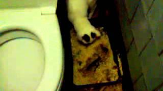 кошка ссыт