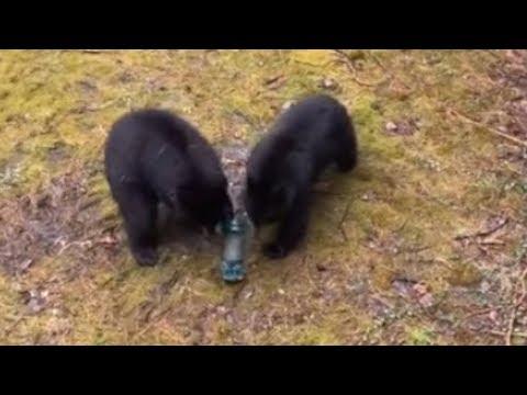 Woman scolds bear family for stealing bird feeder