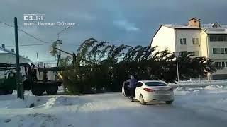 Как везли новогоднюю елку в Карпинске