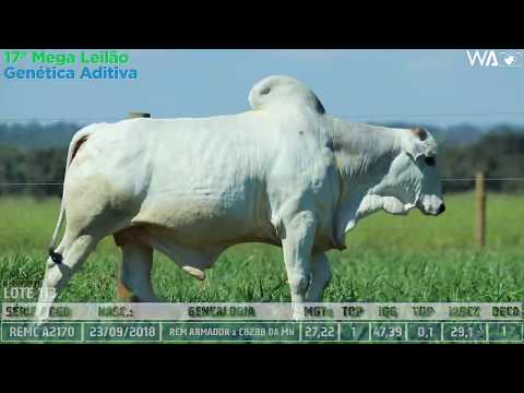 LOTE 113 - REMC A 2170 - 17º Mega Leilão Genética Aditiva 2020