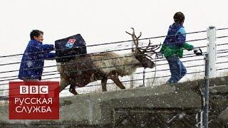 Северный олень доставляет пиццу в Японии
