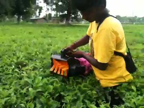 solar powered tea leaf cutting machine