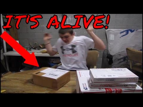 IT'S ALIVE!!!