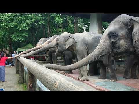 Yangon Zoological Garden 2019 (Myanmar) - ヤンゴン動物園