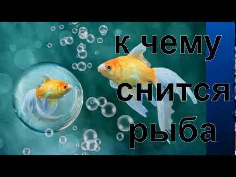 Ok google смотреть сонник приснилась рыба отпускать в воду я