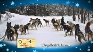 Muddy Paw Sled Dog Kennel Holiday Dogsled Rides