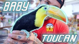 Should I get a baby Toucan?!