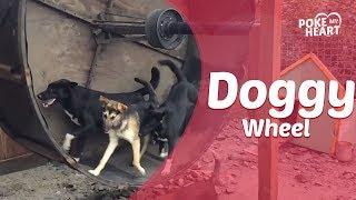 ハムスターの回し車をワンコ用に作ってみたら…犬にも大人気(動画)