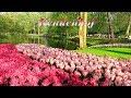 Keukenhof 2018 -  The most beautiful flower park in the world