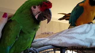 A CRAZY Monday morning with Sammy, Cleo & The Screaming Fids 😱