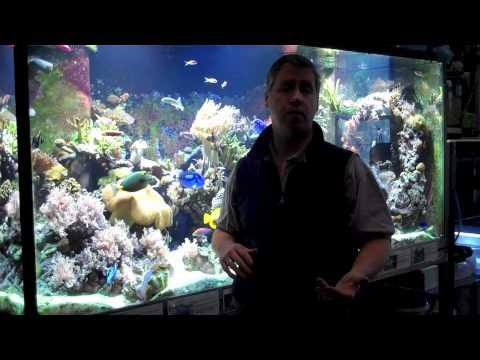 Coral Bleach, Disease & Lighting
