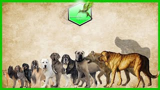 Dog Breed Comparison Size LIVING EXTINCT