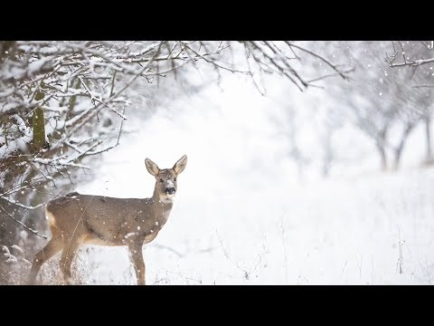 """Peaceful Relaxing Instrumental Music, Meditation Nature Music """"Winter Dream: by Tim Janis"""