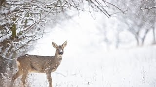 "Peaceful Relaxing Instrumental Music, Meditation Nature Music ""Winter Dream: by Tim Janis"