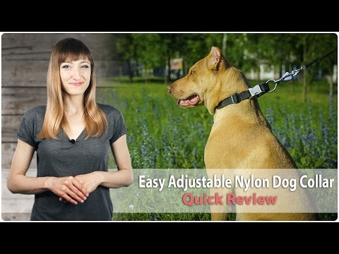 Walking and Training Adjustable Nylon Dog Collar – Quick Review