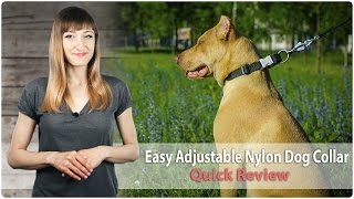 Walking And Training Adjustable Nylon Dog Collar - Quick Review