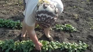 Сельские будни: В огороде,компот из клубники на зиму..