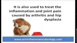 Rimadyl for dogs - Dog arthritis treatment for pain relief